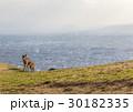 鹿 若草山 奈良の写真 30182335
