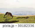 鹿 若草山 奈良の写真 30182336