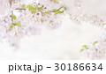 桜 葉桜 春の写真 30186634