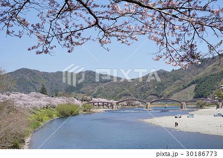桜の花と錦帯橋 30186773