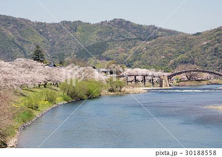桜並木と錦帯橋の風景 30188558