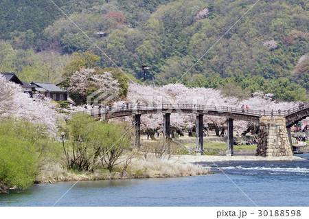 桜並木と錦帯橋の風景 30188598