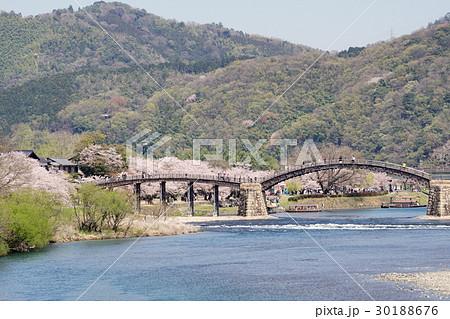 桜並木と錦帯橋の風景 30188676