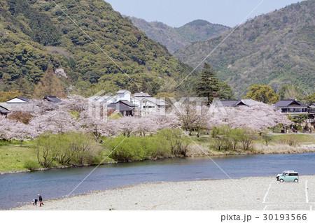 桜並木と錦川 30193566