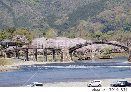 桜と錦帯橋 30194351