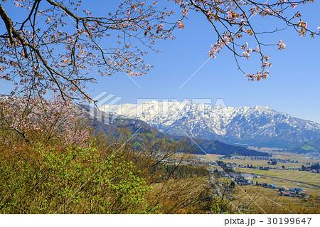 春の桜と巻機山 30199647