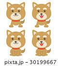 犬 柴犬 イラストのイラスト 30199667