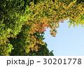 紅葉 空 葉の写真 30201778