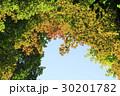 紅葉 葉 空の写真 30201782