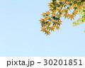 紅葉 葉 空の写真 30201851