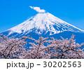富士山 染井吉野 桜の写真 30202563