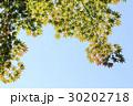 葉 紅葉 空の写真 30202718