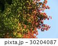 紅葉 葉 空の写真 30204087