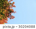 紅葉 空 葉の写真 30204088
