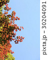 紅葉 空 葉の写真 30204091