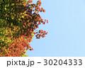 紅葉 空 葉の写真 30204333