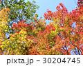 紅葉 葉 楓の写真 30204745
