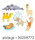 動物 30209772