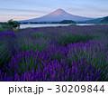富士山 夜明け ラベンダー畑の写真 30209844