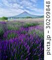 富士山 夏富士 ラベンダー畑の写真 30209848