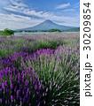 富士山 夏富士 ラベンダー畑の写真 30209854
