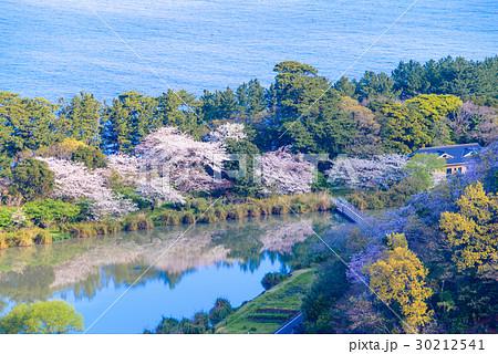 【静岡県沼津市】井田の海岸線と明神池、桜の季節 30212541