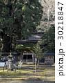 12月 若狭姫神社-若狭の一の宮-  30218847