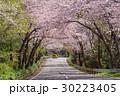 桜のトンネルを走る車 30223405