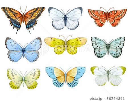 Watercolor butterflies set 30224841