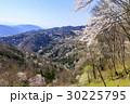 山桜 桜 陸郷の写真 30225795