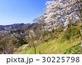 山桜 桜 陸郷の写真 30225798
