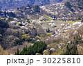 山桜 桜 陸郷の写真 30225810
