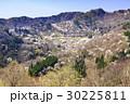 山桜 桜 陸郷の写真 30225811