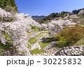 山桜 桜 陸郷の写真 30225832
