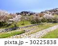 山桜 桜 陸郷の写真 30225838