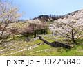 山桜 桜 陸郷の写真 30225840