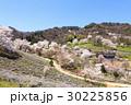 山桜 桜 陸郷の写真 30225856