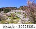 山桜 桜 陸郷の写真 30225861