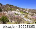 山桜 桜 陸郷の写真 30225863