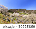 山桜 桜 陸郷の写真 30225869