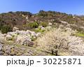 山桜 桜 陸郷の写真 30225871