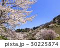 山桜 桜 陸郷の写真 30225874