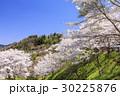山桜 桜 陸郷の写真 30225876