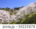 山桜 桜 陸郷の写真 30225878