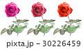 薔薇 バラ ローズのイラスト 30226459
