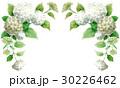 紫陽花アナベルの上部フレーム素材 30226462
