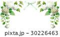 紫陽花アナベルの上部フレーム素材 30226463