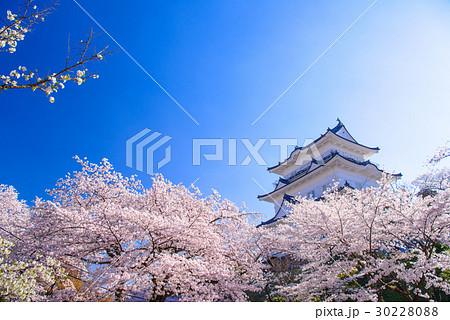 【神奈川県】小田原城、桜の季節 30228088