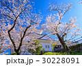 桜 小田原城 空の写真 30228091