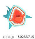 サメ シャーク 鮫のイラスト 30233715